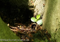 465908_web_R_K_B_by_Maja Dumat_pixelio.de