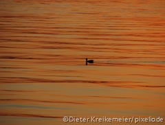 159177_web_R_K_by_Dieter Kreikemeier_pixelio.de