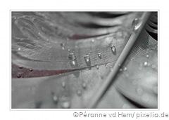 486459_web_R_by_Péronne vd Ham_pixelio.de