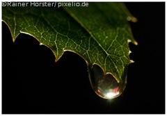 573956_web_R_by_Rainer Hörster_pixelio.de