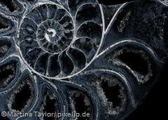 340513_original_R_K_B_by_Martina Taylor_pixelio.de