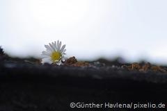 473731_web_R_by_Günter Havlena_pixelio.de