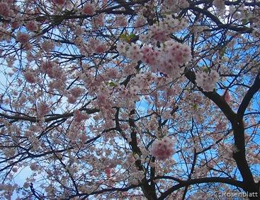 Blütenflausch