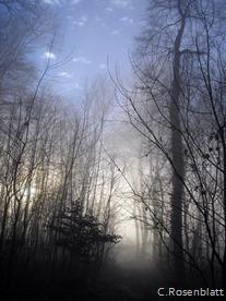 Nebelweg2