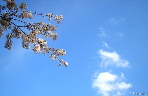 BlütenHimmelMainz