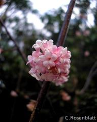 Blütenknäul2