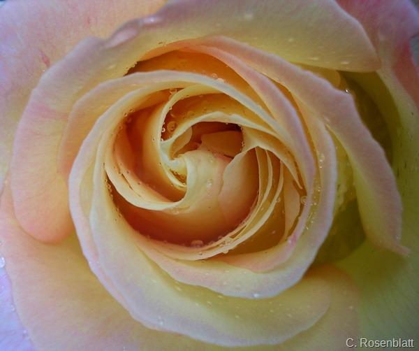 Rosedraufsicht2