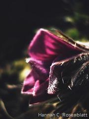Blütenkunst